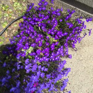 Pollen Spewing Plants