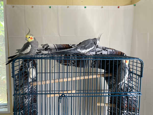 Two Birds On Top of Cage