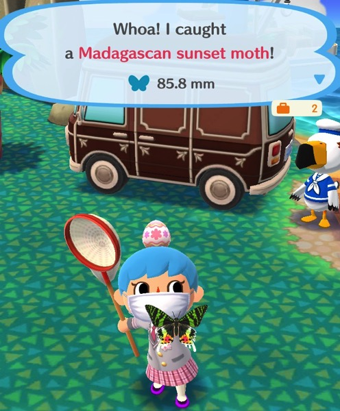 My Pocket Camp character holds up a moth (that looks a lot like a butterfly). The top two wings have green and black stripes. The bottom two wings have orange and yellow like a sun setting.