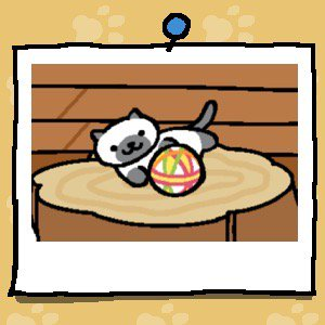 A white cat with grey ears, paws, and tail, plays with a fabric ball.