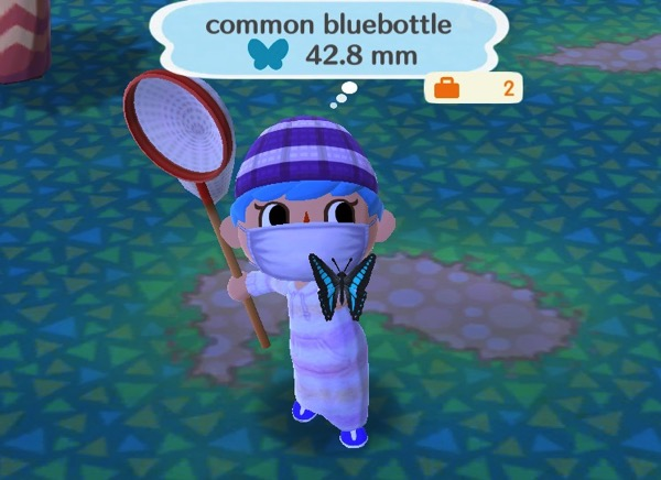 My Pocket Camp character holds up a medium sized butterfly. This one has black color along the sides of its wings, and a bright blue color in the center.