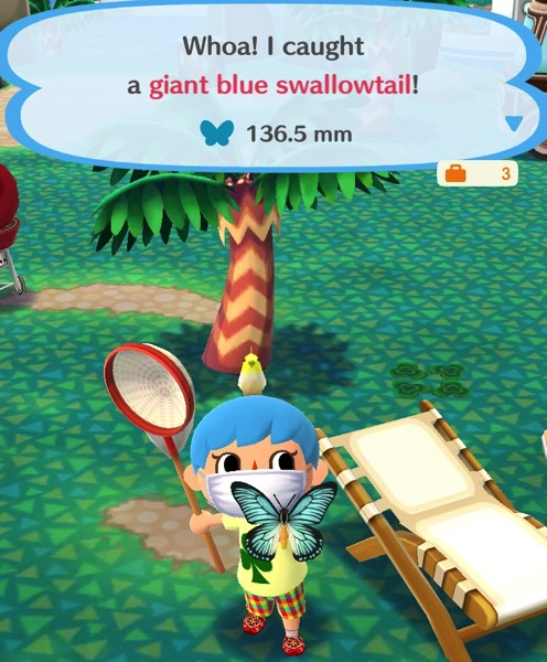 My Pocket Camp character holds up a giant blue swallowtail butterfly. It has crisp black lines around the ends of its wings, and a pale blue color on the inside part. The body of the butterfly is black on the top and yellow on the bottom half.