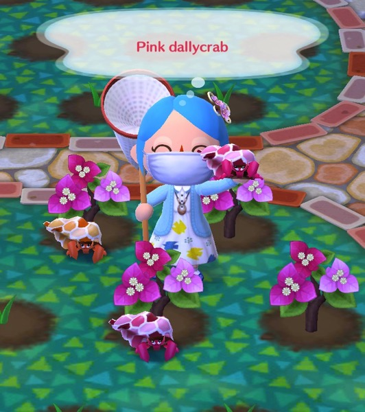 My pocket camp character holding up a pink dallycrab.