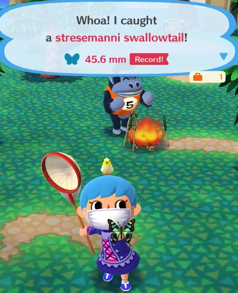 My Pocket Camp character holds up a butterfly that is mostly black. It has green and yellow on the inside of its wings.