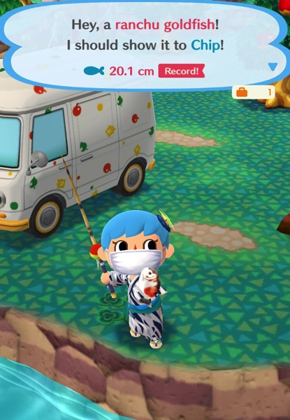 My Pocket Camp character holds up a round ranchu goldfish. It is white, with orange and black spots.