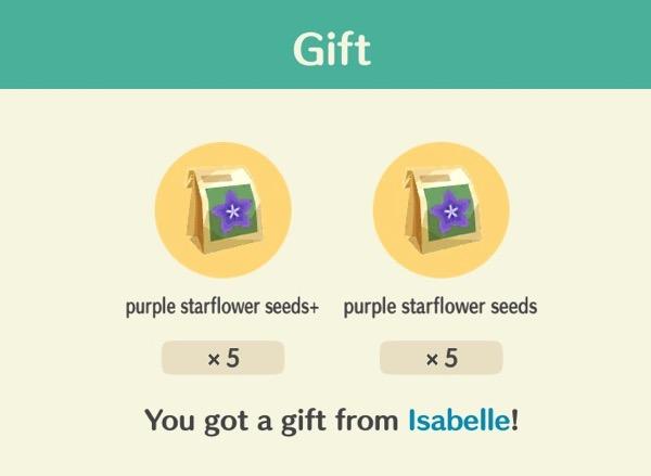 Bags of purple starflower seeds